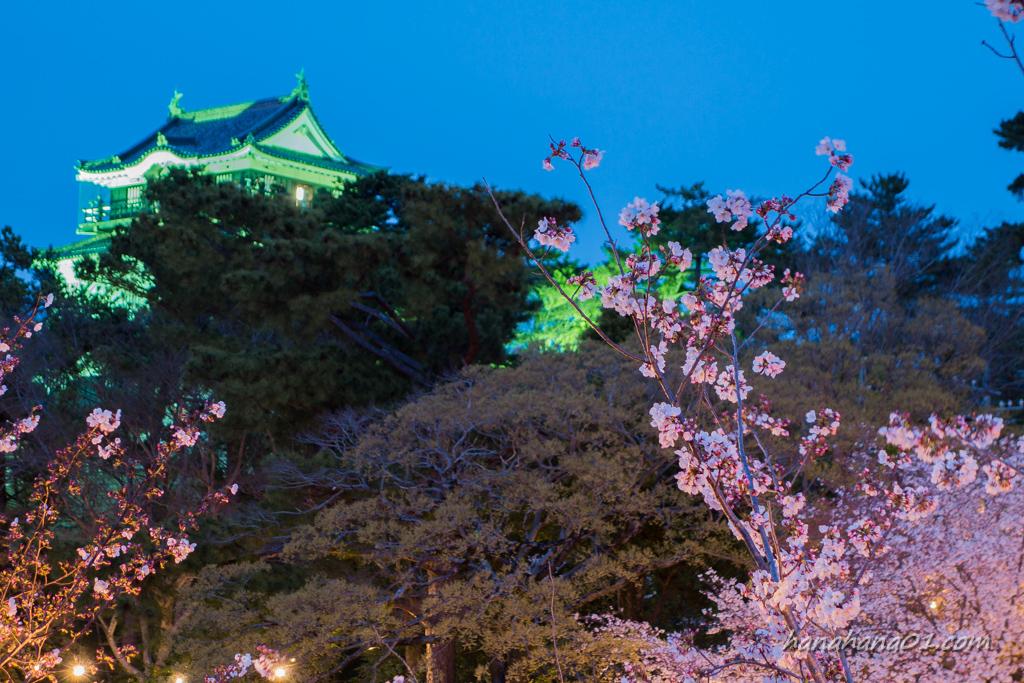 祭り 岡崎 桜